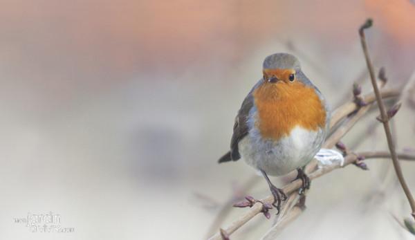 _Conseil_banniere_-_oiseaux_en_hiver.jpg