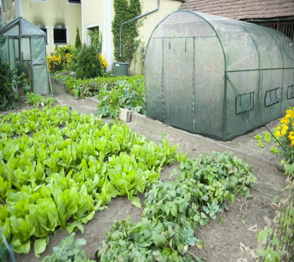 Serre jardin tunnel structure métal 2 x 3 m / polyéthylène vert renforcé 140 gr/m²  / 6 m²