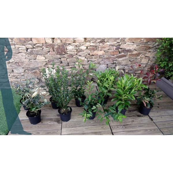 kit de haie croissance rapide 10 plantes pour 10 m de haie mon jardin vivre. Black Bedroom Furniture Sets. Home Design Ideas